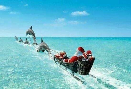 Santa with Dolphins